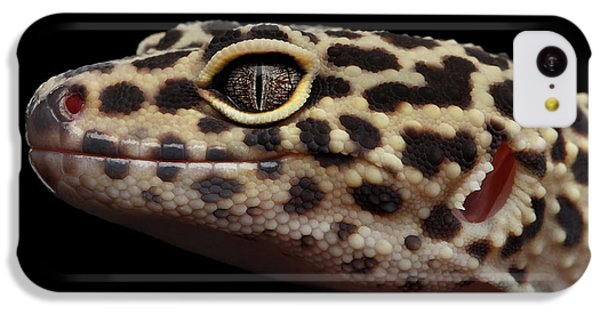 Closeup Head Of Leopard Gecko Eublepharis Macularius Isolated On Black Background IPhone 5c Case by Sergey Taran