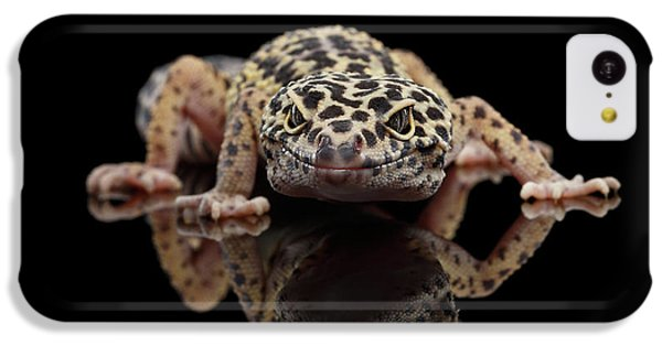 Closeup Leopard Gecko Eublepharis Macularius Isolated On Black Background, Front View IPhone 5c Case by Sergey Taran