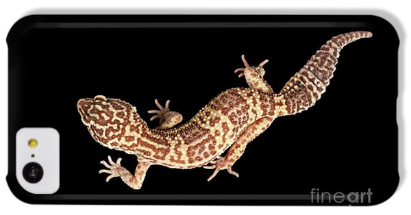 Closeup Leopard Gecko Eublepharis Macularius Isolated On Black Background IPhone 5c Case