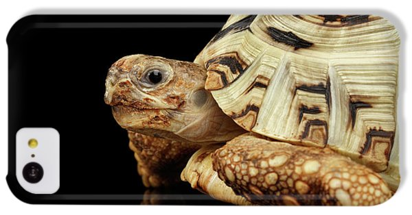 Closeup Leopard Tortoise Albino,stigmochelys Pardalis Turtle With White Shell On Isolated Black Back IPhone 5c Case by Sergey Taran