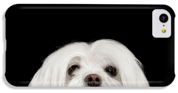 Closeup Nosey White Maltese Dog Looking In Camera Isolated On Black Background IPhone 5c Case