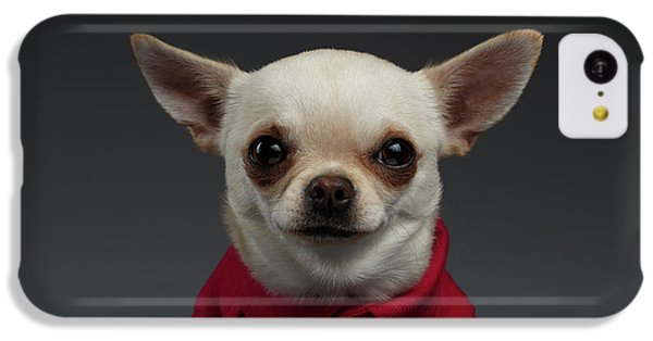 Dog iPhone 5c Case - Closeup Portrait Chihuahua Dog In Stylish Clothes. Gray Background by Sergey Taran