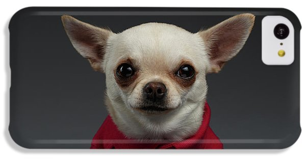 Closeup Portrait Chihuahua Dog In Stylish Clothes. Gray Background IPhone 5c Case
