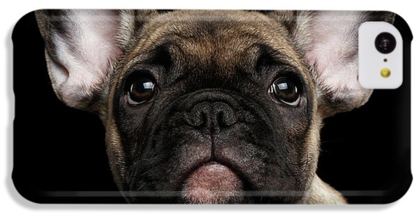 Closeup Portrait French Bulldog Puppy, Cute Looking In Camera IPhone 5c Case