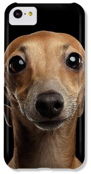Dog iPhone 5c Case - Closeup Portrait Italian Greyhound Dog Looking In Camera Isolated Black by Sergey Taran
