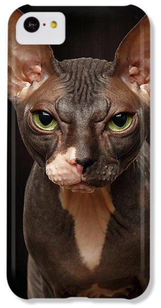 Cat iPhone 5c Case - Closeup Portrait Of Grumpy Sphynx Cat Front View On Black  by Sergey Taran