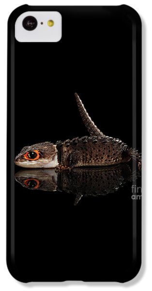 Closeup Red-eyed Crocodile Skink, Tribolonotus Gracilis, Isolated On Black Background IPhone 5c Case by Sergey Taran