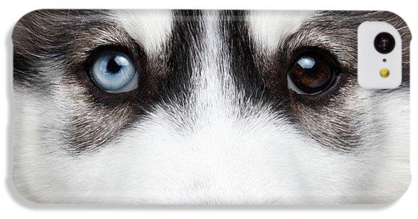 Dog iPhone 5c Case - Closeup Siberian Husky Puppy Different Eyes by Sergey Taran