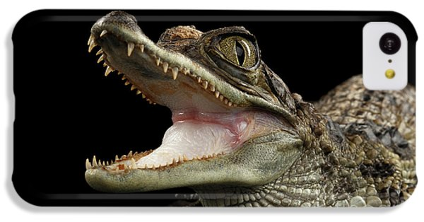 Closeup Young Cayman Crocodile, Reptile With Opened Mouth Isolated On Black Background IPhone 5c Case