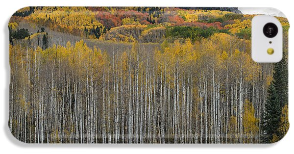 Colorado Splendor IPhone 5c Case