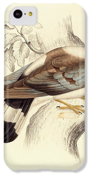 Columba Leuconota, Snow Pigeon IPhone 5c Case by Elizabeth Gould