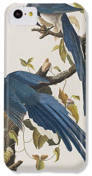 Columbia Jay IPhone 5c Case by John James Audubon