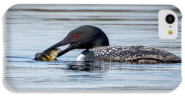 Common Loon Square IPhone 5c Case