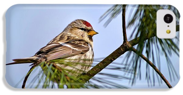IPhone 5c Case featuring the photograph Common Redpoll Bird by Christina Rollo