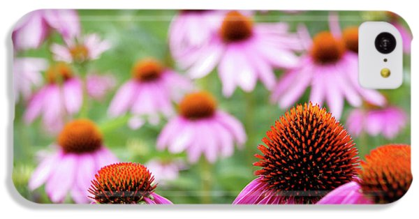 Coneflowers IPhone 5c Case by David Chandler