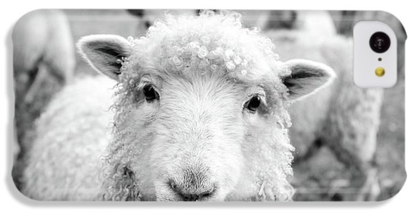 Sheep iPhone 5c Case - Contentment by Pixabay
