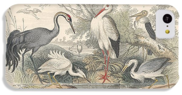 Cranes IPhone 5c Case by Rob Dreyer