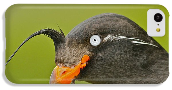 Crested Auklet IPhone 5c Case by Desmond Dugan/FLPA