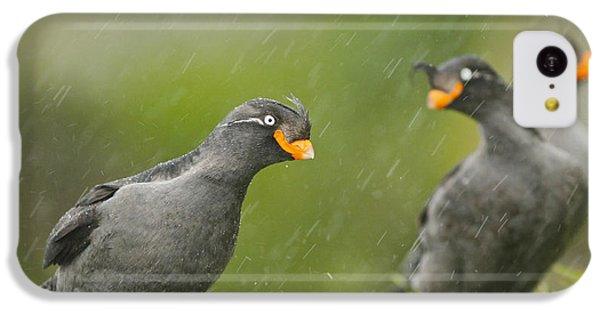 Crested Auklets IPhone 5c Case by Desmond Dugan/FLPA