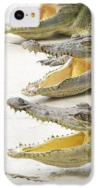 Crocodile Choir IPhone 5c Case by Jorgo Photography - Wall Art Gallery