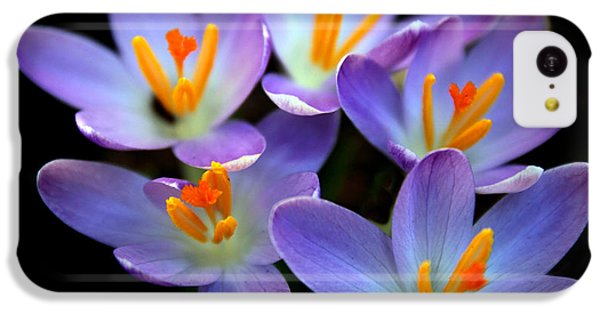 IPhone 5c Case featuring the photograph Crocus Aglow by Jessica Jenney
