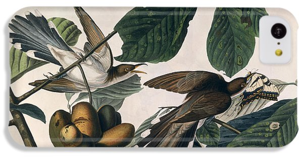 Cuckoo iPhone 5c Case - Cuckoo by John James Audubon
