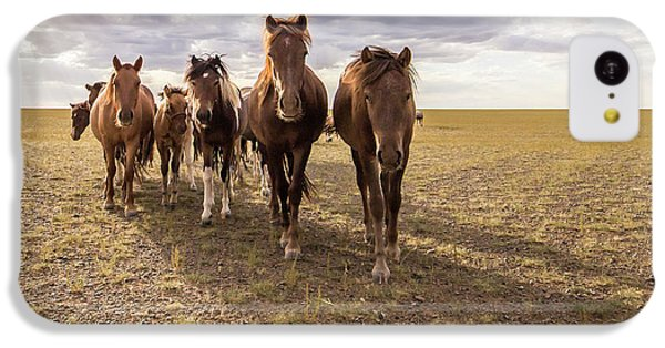 IPhone 5c Case featuring the photograph Curious Horses by Hitendra SINKAR