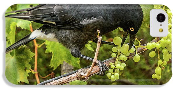 Currawong On A Vine IPhone 5c Case