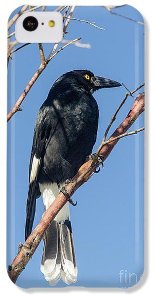 Currawong IPhone 5c Case by Werner Padarin