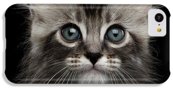 Cute American Curl Kitten With Twisted Ears Isolated Black Background IPhone 5c Case