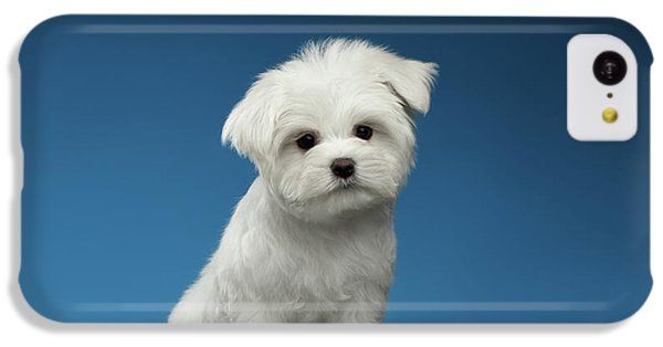 Cute Pure White Maltese Puppy Standing And Curiously Looking In Camera Isolated On Blue Background IPhone 5c Case by Sergey Taran