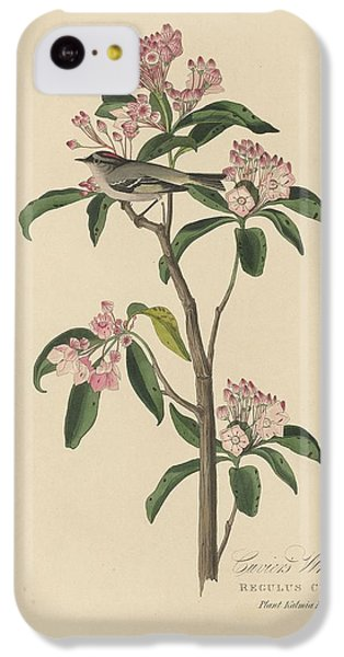 Cuvier's Wren IPhone 5c Case