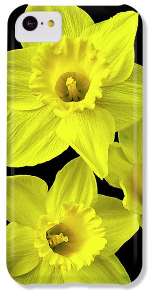 Daffodils IPhone 5c Case by Christina Rollo