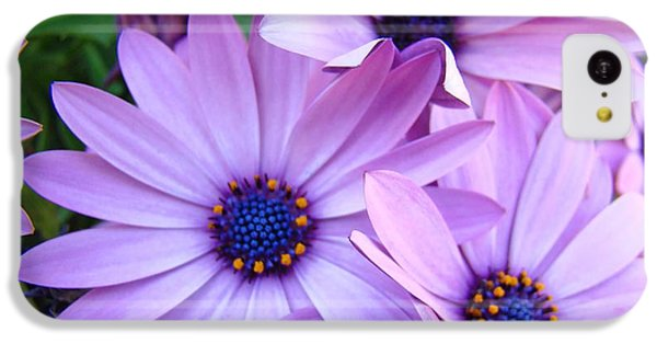 Daisies Lavender Purple Daisy Flowers Baslee Troutman IPhone 5c Case