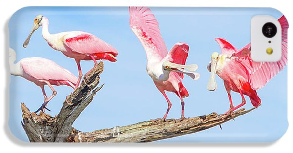 Day Of The Spoonbill  IPhone 5c Case