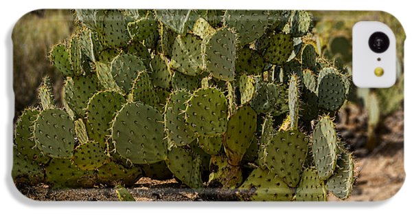 Desert Prickly-pear No6 IPhone 5c Case