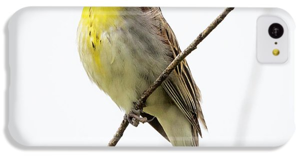 Dickcissel  IPhone 5c Case