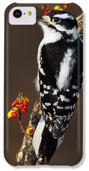 Downy Woodpecker On Tree Branch IPhone 5c Case by Panoramic Images