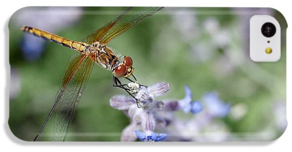 Dragonfly In The Lavender Garden IPhone 5c Case