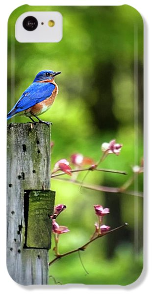 Eastern Bluebird IPhone 5c Case