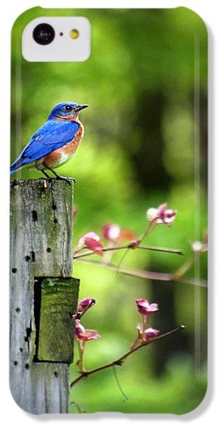 Eastern Bluebird IPhone 5c Case by Christina Rollo