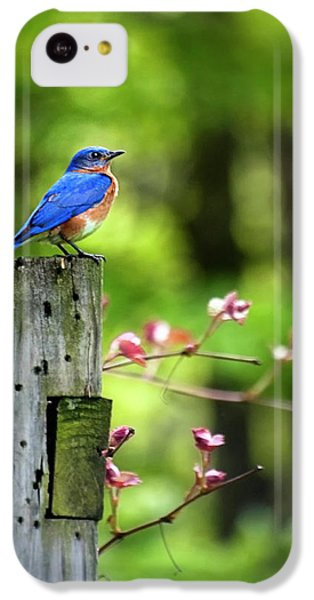 Eastern Bluebird IPhone 5c Case by Christina Rollo