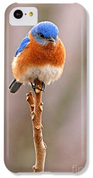 Bluebird iPhone 5c Case - Eastern Bluebird Treetop Perch by Max Allen