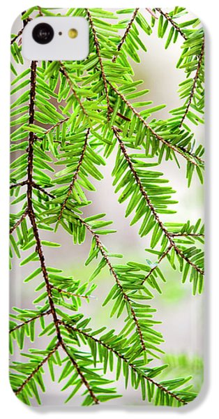 Eastern Hemlock Tree Abstract IPhone 5c Case by Christina Rollo