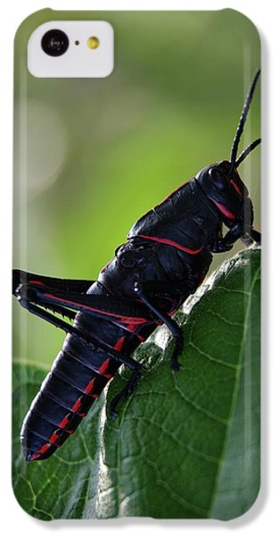 Eastern Lubber Grasshopper IPhone 5c Case