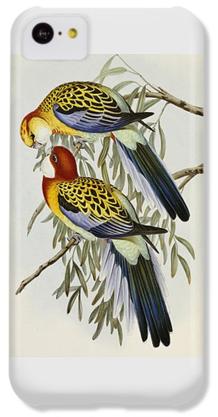 Eastern Rosella IPhone 5c Case
