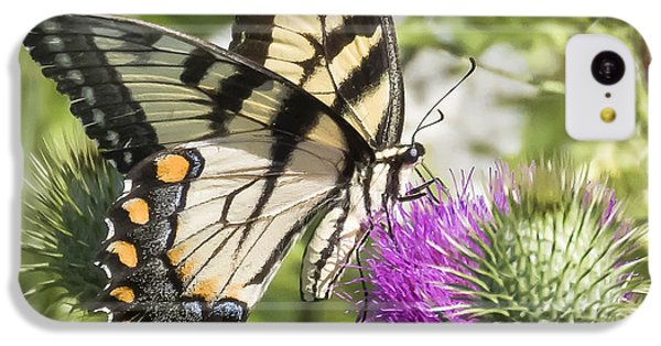 Eastern Tiger Swallowtail IPhone 5c Case
