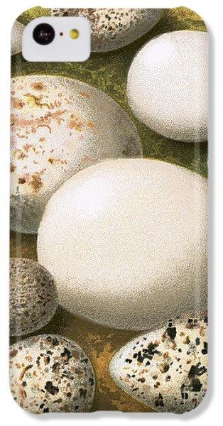 Eggs IPhone 5c Case