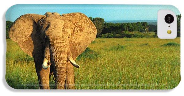Elephant IPhone 5c Case by Sebastian Musial