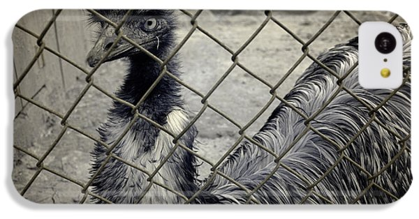 Emu At The Zoo IPhone 5c Case by Luke Moore